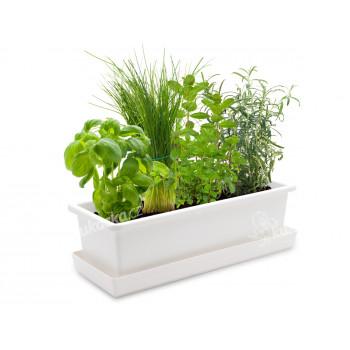 Vypěstuj si bylinkový mix, bílý truhlík, CatMotion