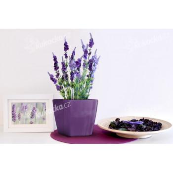 Vypěstuj si levanduli, samozavlažovací květináč fialový 13x13 cm, Domestico