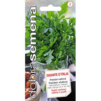 Dobrá semena Petržel naťová - Gigante D´Italia hladká 4g - VÝPRODEJ