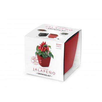 VYPĚSTUJ SI JALAPEŇO, dárková sada se samozavlažovacím květináčem, ČERVENÝ 13X13 CM, DOMESTICO