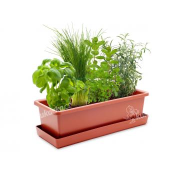 Vypěstuj si bylinkový mix, terracota truhlík, CatMotion