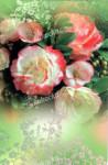 Blahopřání univerzální květiny, DITIPO - VÝPRODEJ