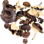 Dekorace - Golden mushroom (sušené zlaté houby) mix - 10 ks