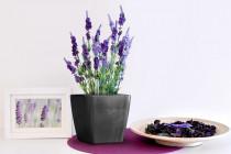 Vypěstuj si levanduli, samozavlažovací květináč tmavě stříbrný 13x13 cm, Domestico