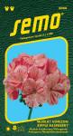 Semo Pelargonie páskatá - Horizon Ripple Raspberry 11s