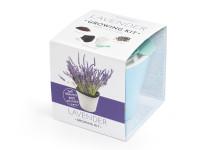 Vypěstuj si levanduli, samozavlažovací květináč modrý 10x10 cm, Domestico