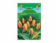 Tulipán, Kaufmanniana hybridy GUISEPPE VERDI 5ks