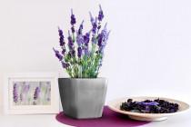Vypěstuj si levanduli, samozavlažovací květináč stříbrný 13x13 cm, Domestico