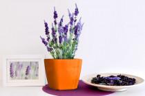 Vypěstuj si levanduli, samozavlažovací květináč oranžový 13x13 cm, Domestico