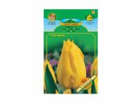 Tulipán, jednoduchý pozdní Cottage YOKOHAMA 5ks