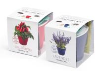 Vypěstuj si levanduli a jalapeňo 1+1 set, samozavlažovací květináče 10x10 cm, Domestico