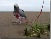 Kšandy s vodítkem pro papoušky Terra vel. S