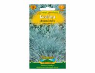 Osivo Kostřava - okrasná tráva, modrá