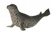 Tuleň pacifický