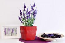 Vypěstuj si levanduli, samozavlažovací květináč červený 13x13 cm, Domestico