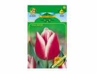 Tulipán triumph LUCKY STRIKE 5ks