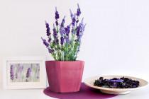 Vypěstuj si levanduli, samozavlažovací květináč růžový 13x13 cm, Domestico